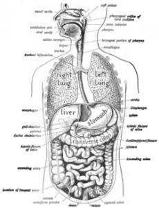 Gut Health 101